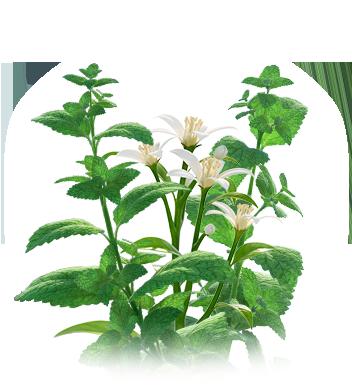 Produktverpackung umgeben von Heilpflanzen