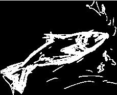 Zeichnung Fisch
